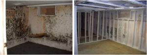 Great Kills staten island mold project