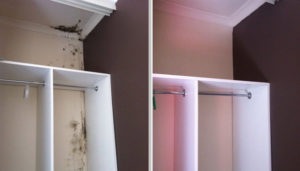 New Dorpstaten island mold removal project