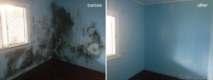 St. George staten island mold removal project