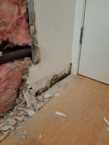Todt Hill staten island NY mold removal project